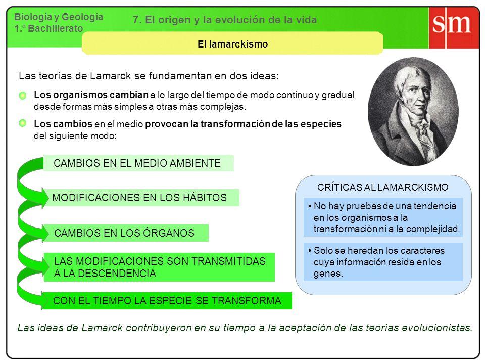 Biología y Geología 1.º Bachillerato 7. El origen y la evolución de la vida El lamarckismo CON EL TIEMPO LA ESPECIE SE TRANSFORMA LAS MODIFICACIONES S