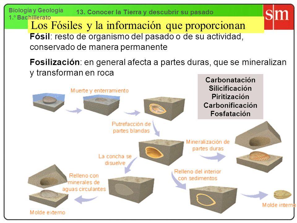 Los Fósiles y la información que proporcionan Fósil: resto de organismo del pasado o de su actividad, conservado de manera permanente Fosilización: en