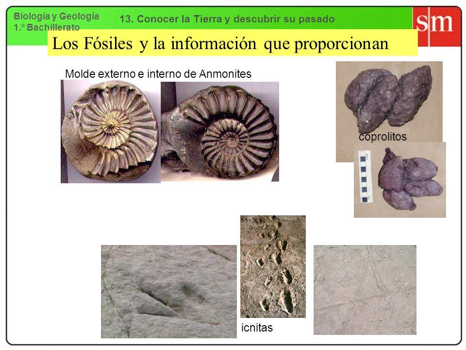 Los Fósiles y la información que proporcionan Molde externo e interno de Anmonites coprolitos icnitas Biología y Geología 1.º Bachillerato 13. Conocer