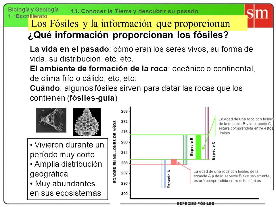 Los Fósiles y la información que proporcionan ¿Qué información proporcionan los fósiles? La vida en el pasado: cómo eran los seres vivos, su forma de