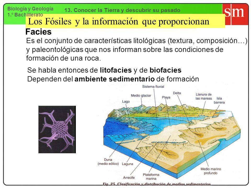 Los Fósiles y la información que proporcionan Facies Es el conjunto de características litológicas (textura, composición…) y paleontológicas que nos i