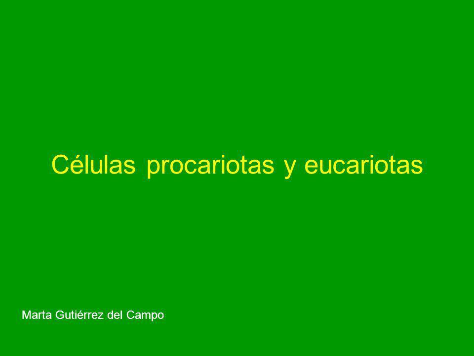 Células procariotas y eucariotas Marta Gutiérrez del Campo