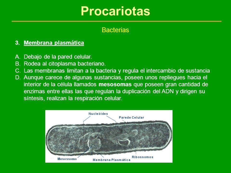 Procariotas Bacterias 3.Membrana plasmática A.Debajo de la pared celular. B.Rodea al citoplasma bacteriano. C.Las membranas limitan a la bacteria y re