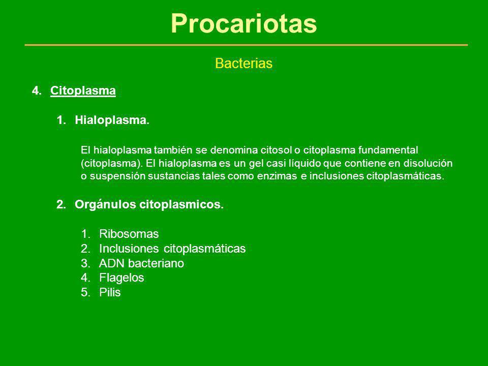 Procariotas Bacterias 4.Citoplasma 1.Hialoplasma. El hialoplasma también se denomina citosol o citoplasma fundamental (citoplasma). El hialoplasma es