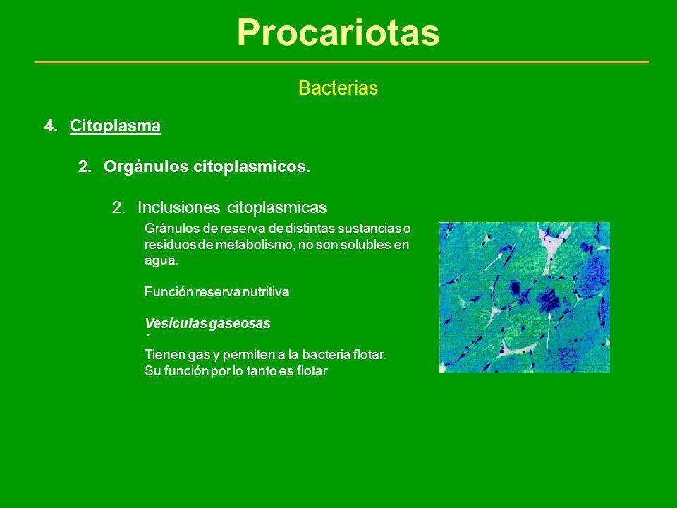 Procariotas Bacterias 4.Citoplasma 2.Orgánulos citoplasmicos. 2.Inclusiones citoplasmicas Gránulos de reserva de distintas sustancias o residuos de me