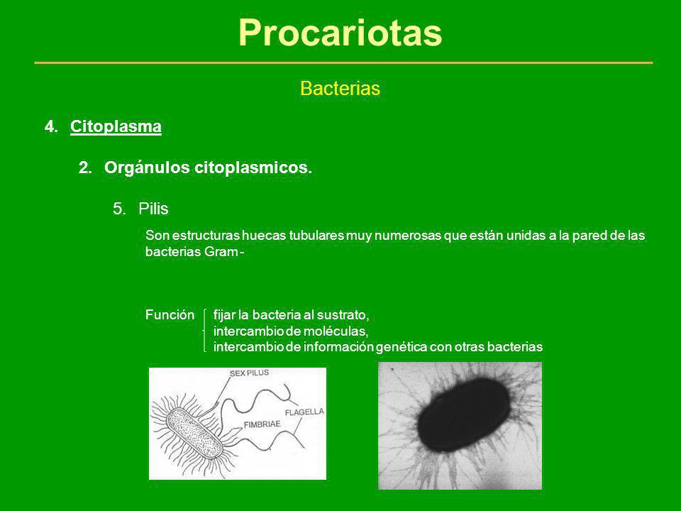 Procariotas Bacterias 4.Citoplasma 2.Orgánulos citoplasmicos. 5.Pilis Son estructuras huecas tubulares muy numerosas que están unidas a la pared de la