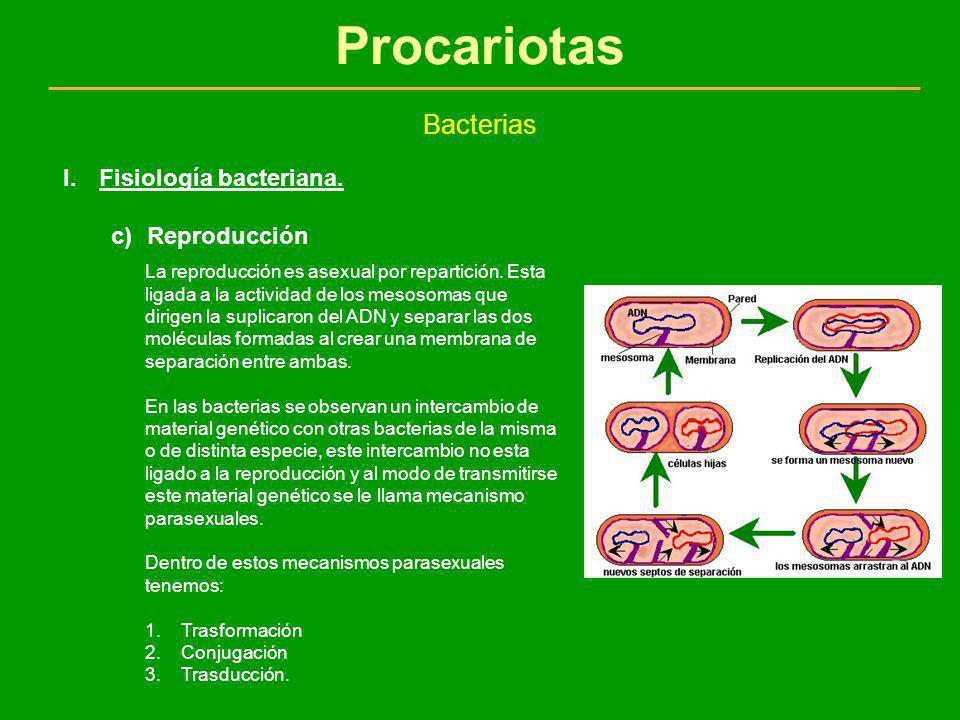 Procariotas Bacterias I.Fisiología bacteriana. c)Reproducción La reproducción es asexual por repartición. Esta ligada a la actividad de los mesosomas