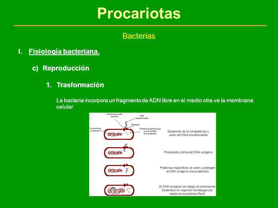 Procariotas Bacterias I.Fisiología bacteriana. c)Reproducción 1.Trasformación La bacteria incorpora un fragmento de ADN libre en el medio otra ve la m