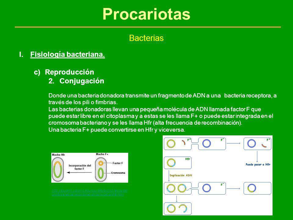 Procariotas Bacterias I.Fisiología bacteriana. c)Reproducción 2.Conjugación Donde una bacteria donadora transmite un fragmento de ADN a una bacteria r