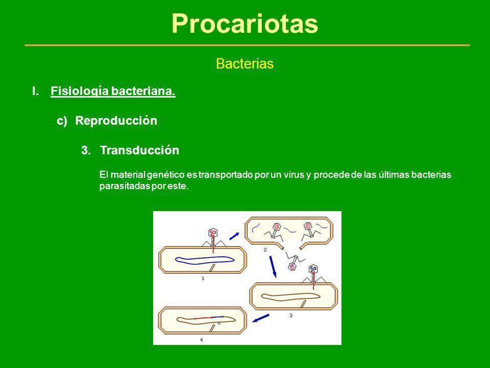 Procariotas Bacterias I.Fisiología bacteriana. c)Reproducción 3.Transducción El material genético es transportado por un virus y procede de las última