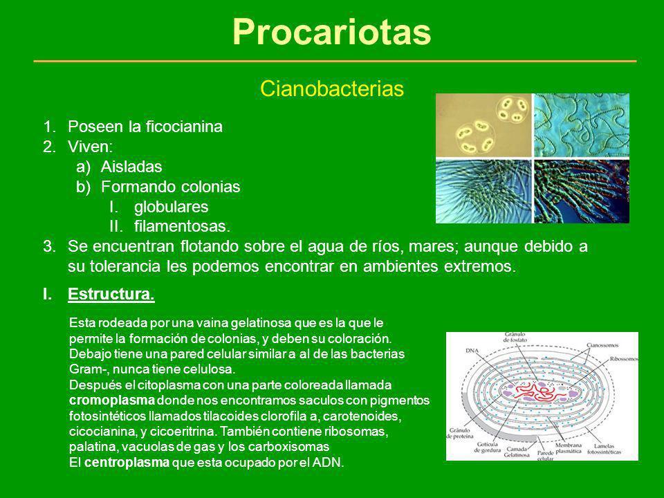 Procariotas Cianobacterias 1.Poseen la ficocianina 2.Viven: a)Aisladas b)Formando colonias I.globulares II.filamentosas. 3.Se encuentran flotando sobr