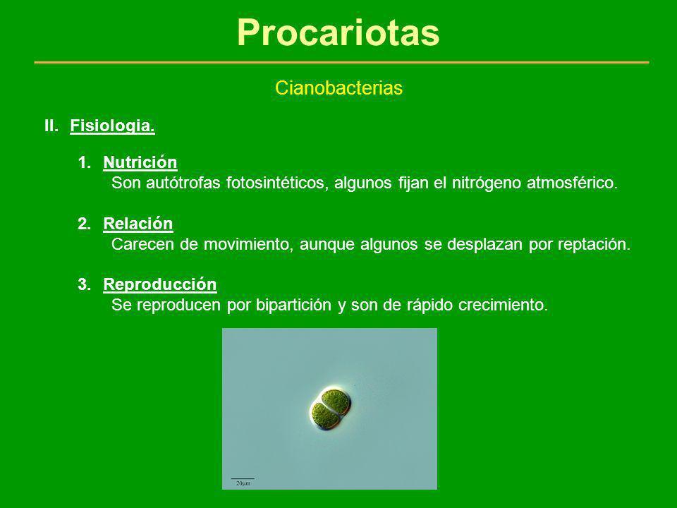Procariotas Cianobacterias 1.Nutrición Son autótrofas fotosintéticos, algunos fijan el nitrógeno atmosférico. 2.Relación Carecen de movimiento, aunque