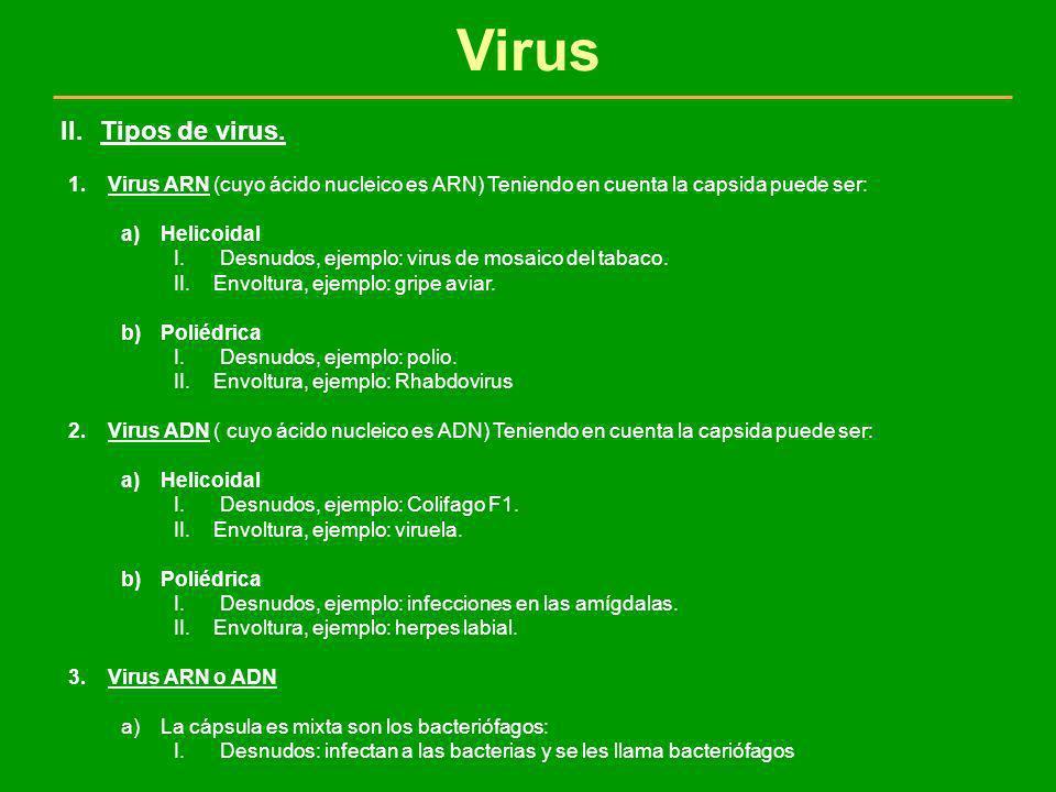 Virus 1.Virus ARN (cuyo ácido nucleico es ARN) Teniendo en cuenta la capsida puede ser: a)Helicoidal I.Desnudos, ejemplo: virus de mosaico del tabaco.
