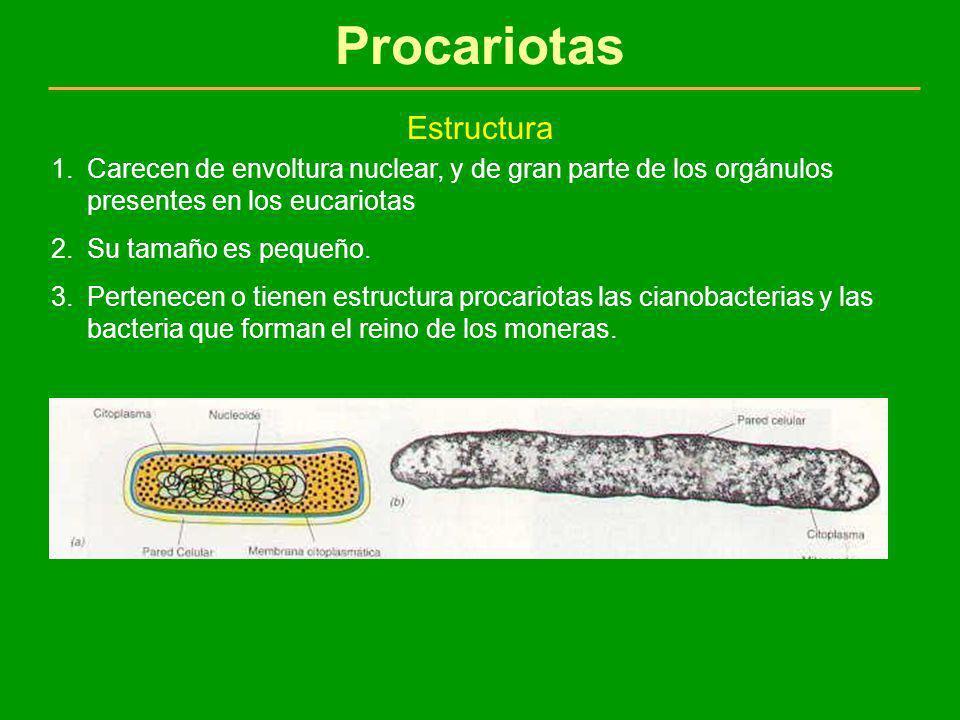 Procariotas Estructura 1.Carecen de envoltura nuclear, y de gran parte de los orgánulos presentes en los eucariotas 2.Su tamaño es pequeño. 3.Pertenec
