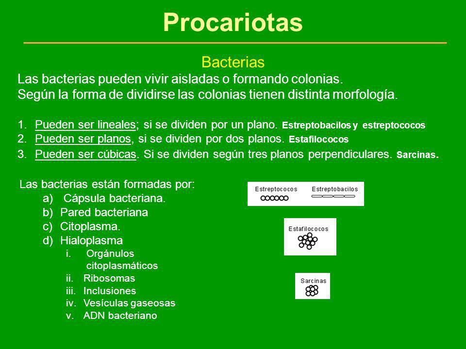 Procariotas Bacterias Las bacterias pueden vivir aisladas o formando colonias. Según la forma de dividirse las colonias tienen distinta morfología. 1.