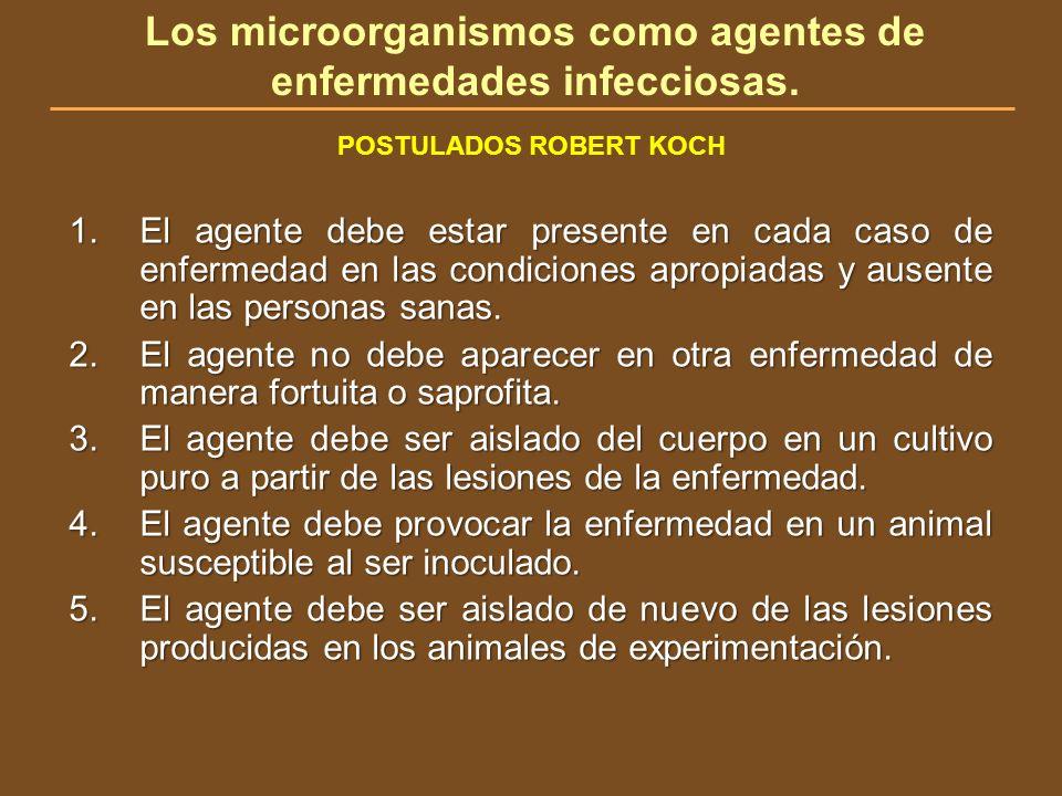 Los microorganismos como agentes de enfermedades infecciosas. POSTULADOS ROBERT KOCH 1.El agente debe estar presente en cada caso de enfermedad en las