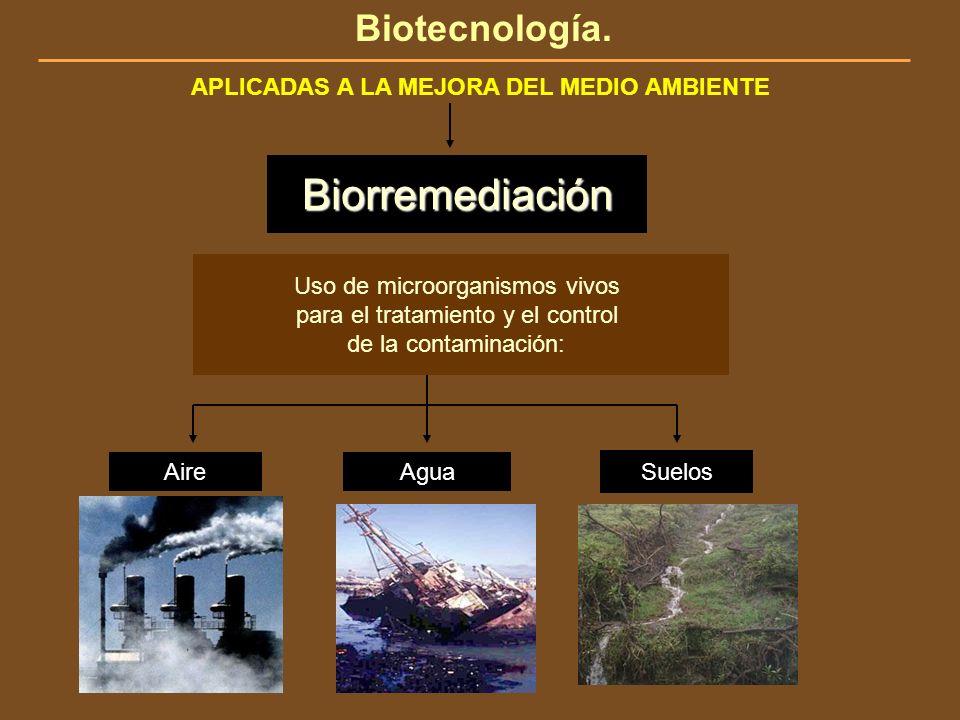 Biotecnología. APLICADAS A LA MEJORA DEL MEDIO AMBIENTE Uso de microorganismos vivos para el tratamiento y el control de la contaminación: Biorremedia