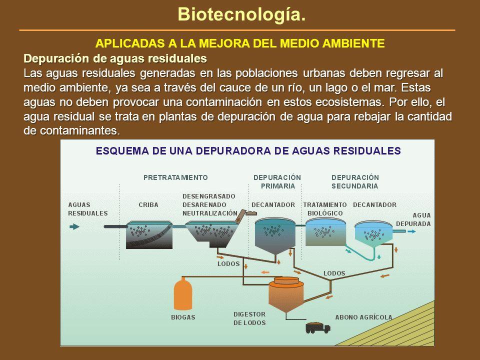 Biotecnología. APLICADAS A LA MEJORA DEL MEDIO AMBIENTE Depuración de aguas residuales Las aguas residuales generadas en las poblaciones urbanas deben