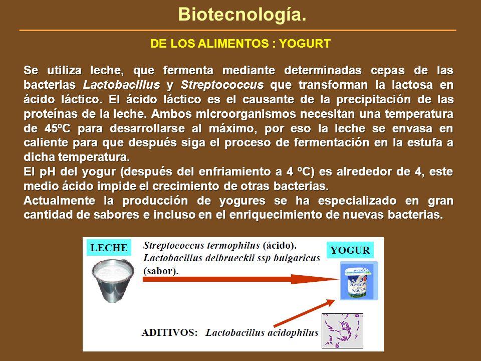 Biotecnología. DE LOS ALIMENTOS : YOGURT Se utiliza leche, que fermenta mediante determinadas cepas de las bacterias Lactobacillus y Streptococcus que