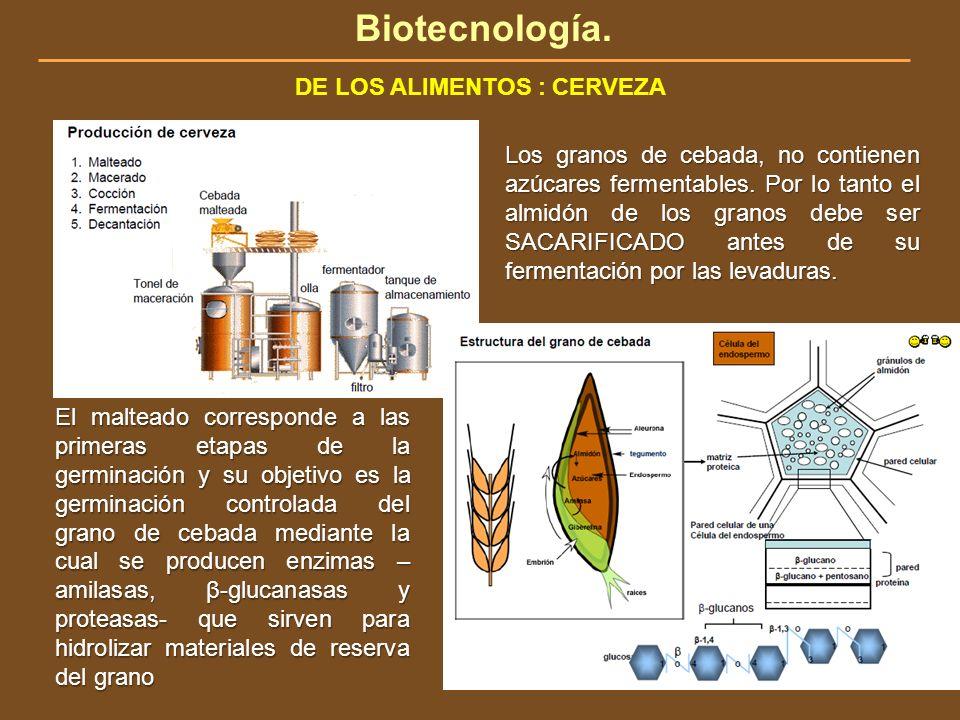 Biotecnología. DE LOS ALIMENTOS : CERVEZA Los granos de cebada, no contienen azúcares fermentables. Por lo tanto el almidón de los granos debe ser SAC
