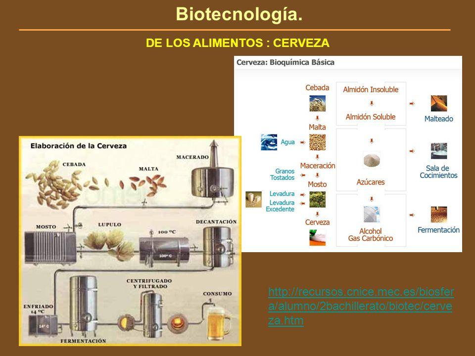 Biotecnología. DE LOS ALIMENTOS : CERVEZA http://recursos.cnice.mec.es/biosfer a/alumno/2bachillerato/biotec/cerve za.htm
