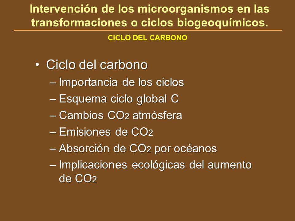CICLO DEL CARBONO Intervención de los microorganismos en las transformaciones o ciclos biogeoquímicos. Ciclo del carbonoCiclo del carbono –Importancia
