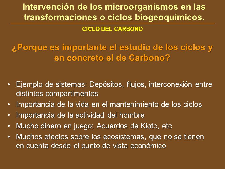 CICLO DEL CARBONO Intervención de los microorganismos en las transformaciones o ciclos biogeoquímicos. ¿Porque es importante el estudio de los ciclos