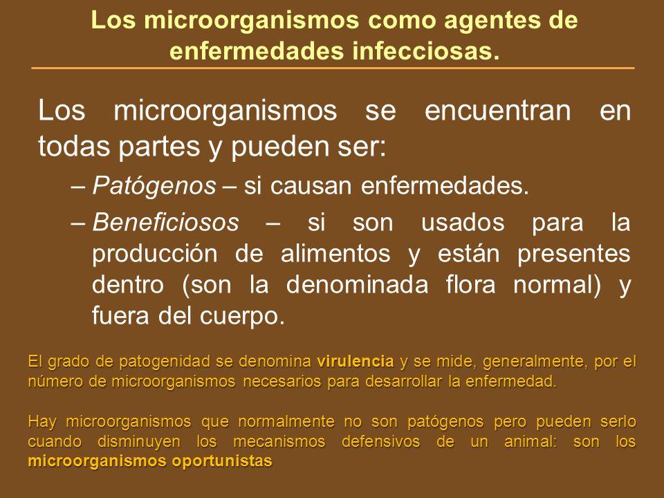 Los microorganismos como agentes de enfermedades infecciosas. Los microorganismos se encuentran en todas partes y pueden ser: –Patógenos – si causan e