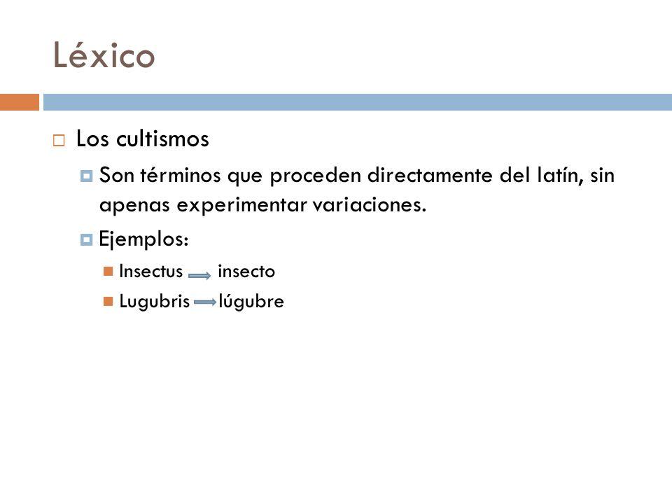 Léxico Los cultismos Son términos que proceden directamente del latín, sin apenas experimentar variaciones. Ejemplos: Insectus insecto Lugubris lúgubr
