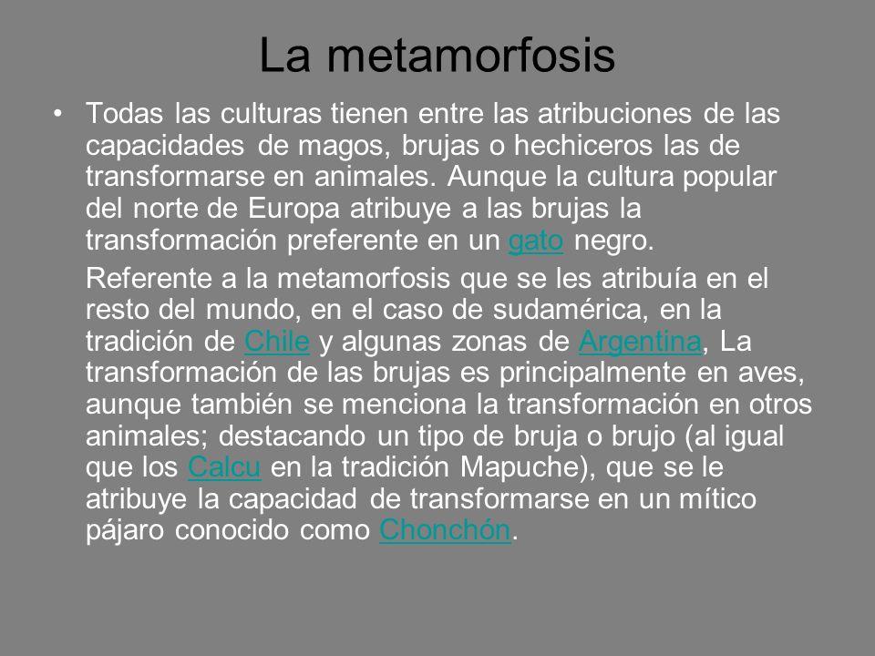 La metamorfosis Todas las culturas tienen entre las atribuciones de las capacidades de magos, brujas o hechiceros las de transformarse en animales. Au