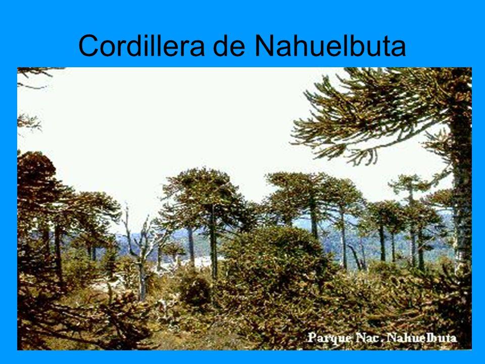 Cordillera de Nahuelbuta