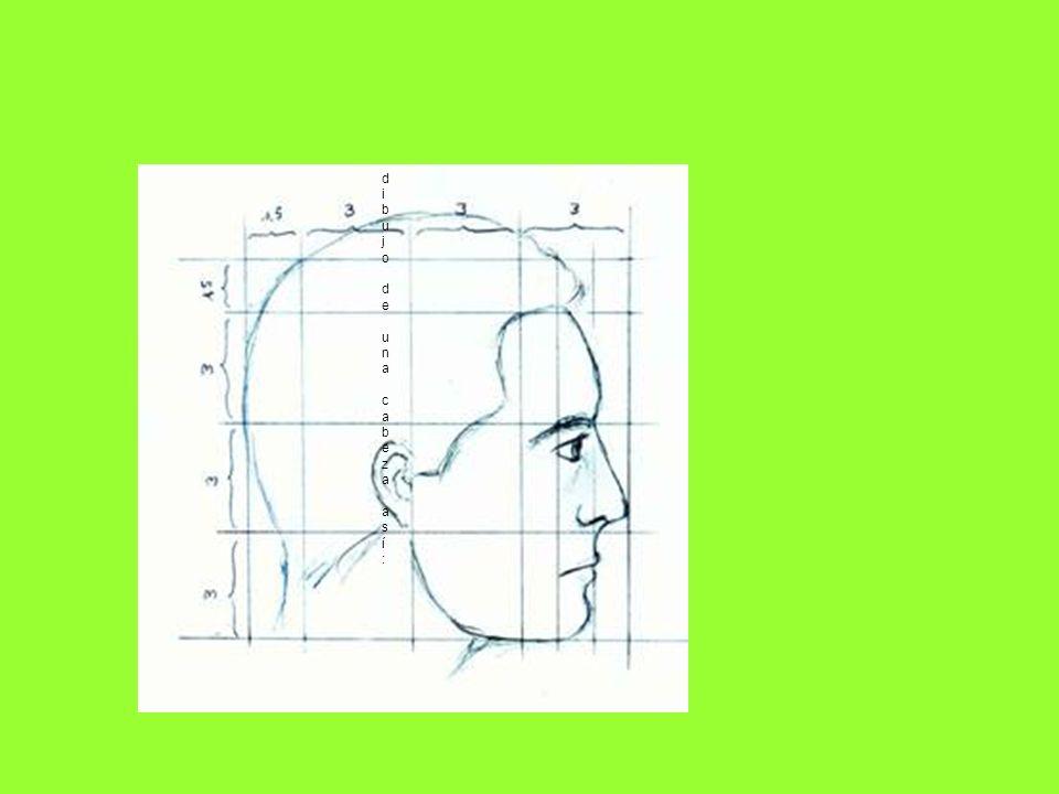 dibujo de una cabeza así:dibujo de una cabeza así: