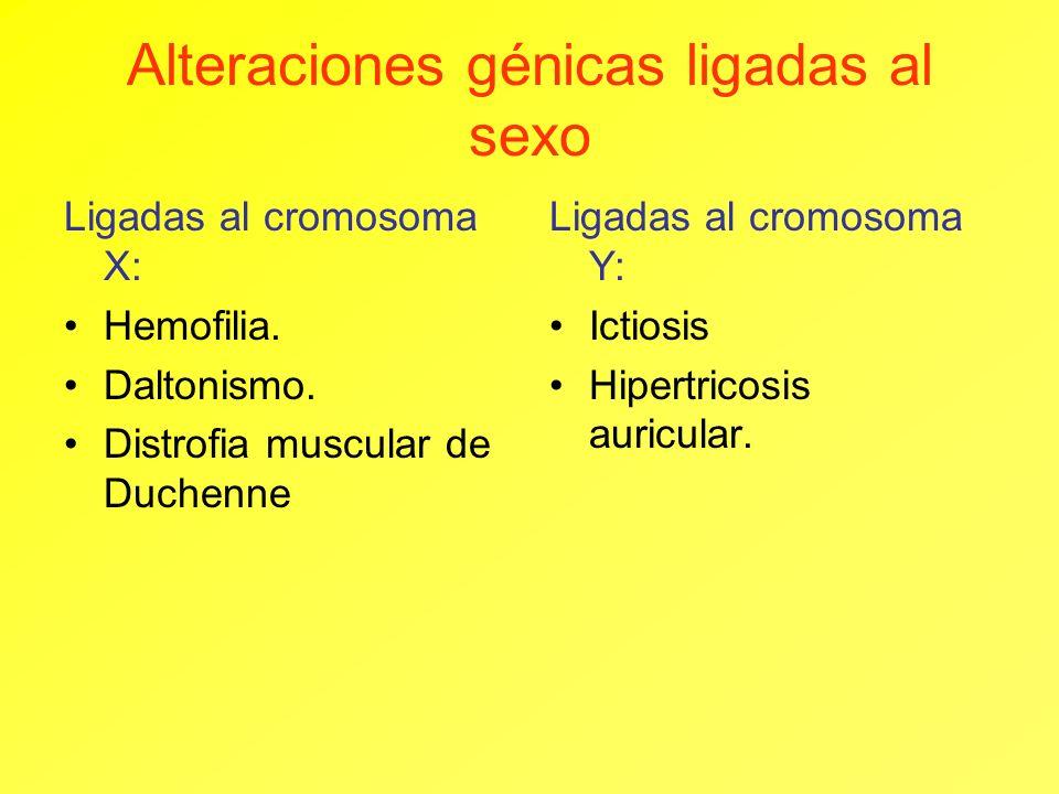 Alteraciones génicas ligadas al sexo Ligadas al cromosoma X: Hemofilia. Daltonismo. Distrofia muscular de Duchenne Ligadas al cromosoma Y: Ictiosis Hi