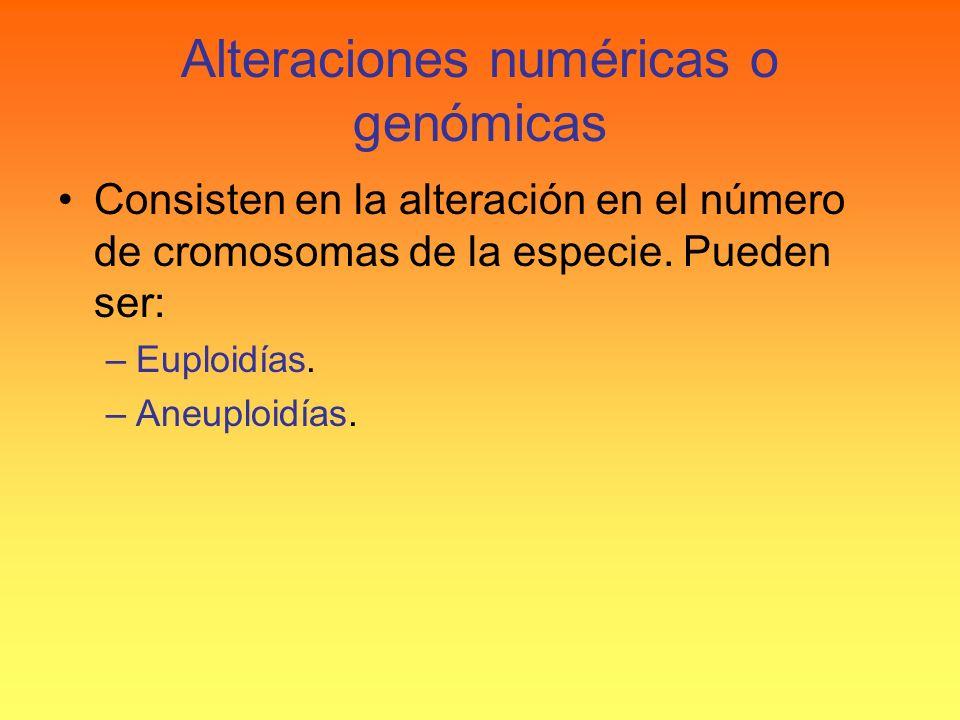 Alteraciones numéricas o genómicas Consisten en la alteración en el número de cromosomas de la especie. Pueden ser: –Euploidías. –Aneuploidías.