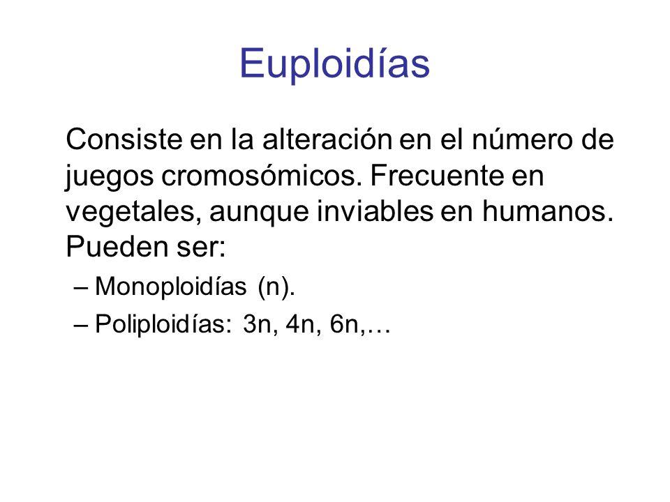 Euploidías Consiste en la alteración en el número de juegos cromosómicos. Frecuente en vegetales, aunque inviables en humanos. Pueden ser: –Monoploidí
