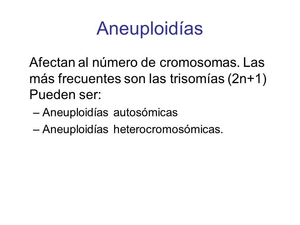 Aneuploidías Afectan al número de cromosomas. Las más frecuentes son las trisomías (2n+1) Pueden ser: –Aneuploidías autosómicas –Aneuploidías heterocr