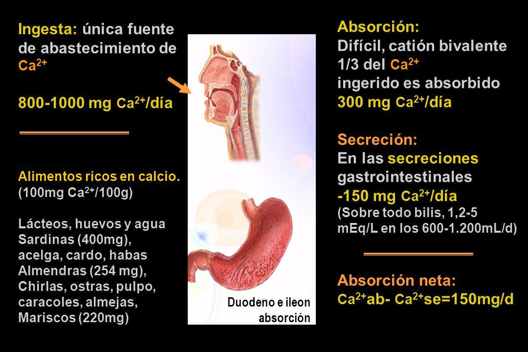 Ingesta: única fuente de abastecimiento de Ca 2+ 800-1000 mg Ca 2+ /día Alimentos ricos en calcio. (100mg Ca 2+ /100g) Lácteos, huevos y agua Sardinas