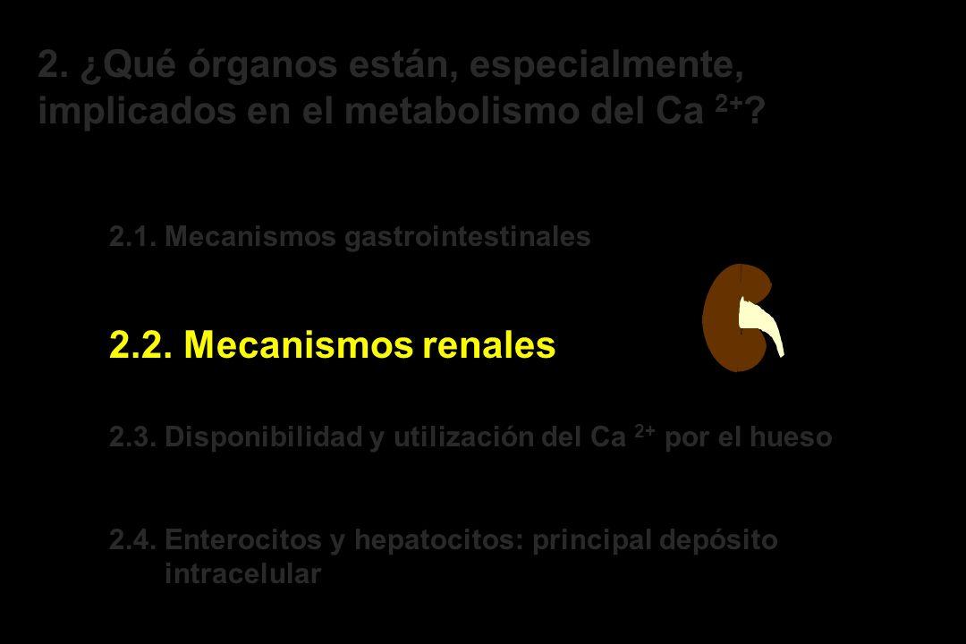2. ¿Qué órganos están, especialmente, implicados en el metabolismo del Ca 2+ ? 2.1. Mecanismos gastrointestinales 2.2. Mecanismos renales 2.3. Disponi
