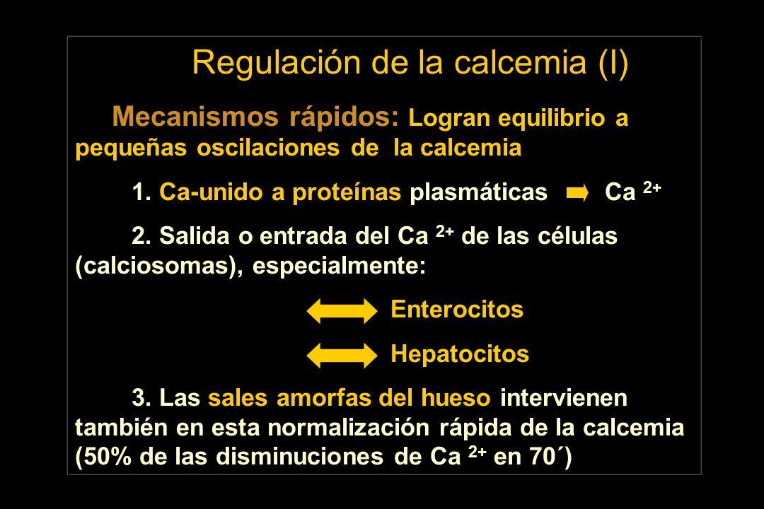 Regulación de la calcemia (I) Mecanismos rápidos: Logran equilibrio a pequeñas oscilaciones de la calcemia 1. Ca-unido a proteínas plasmáticas Ca 2+ 2