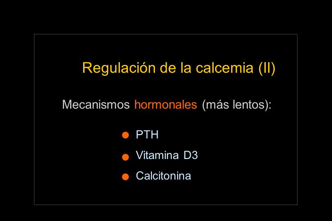 Regulación de la calcemia (II) Mecanismos hormonales (más lentos): PTH Vitamina D3 Calcitonina