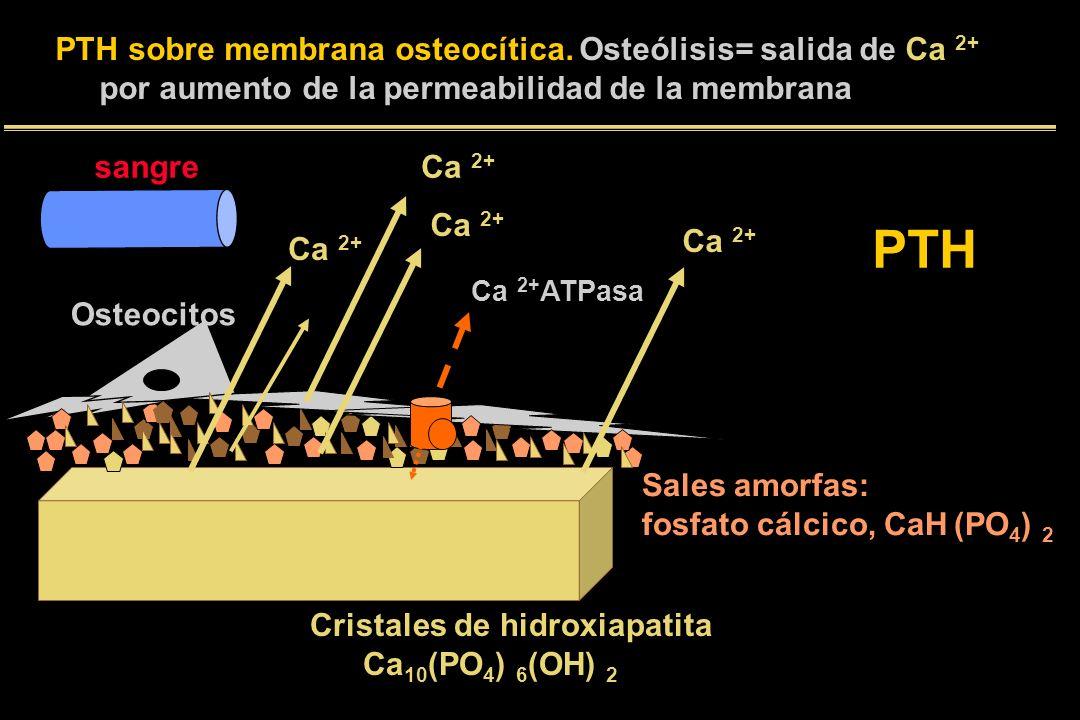 Cristales de hidroxiapatita Ca 10 (PO 4 ) 6 (OH) 2 Sales amorfas: fosfato cálcico, CaH (PO 4 ) 2 Osteocitos Ca 2+ ATPasa Ca 2+ PTH sobre membrana oste