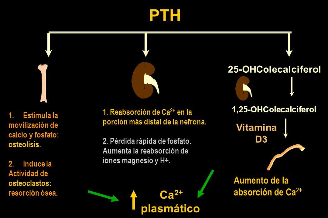 PTH 25-OHColecalciferol 1,25-OHColecalciferol 1.Estimula la movilización de calcio y fosfato: osteolisis. 2.Induce la Actividad de osteoclastos: resor
