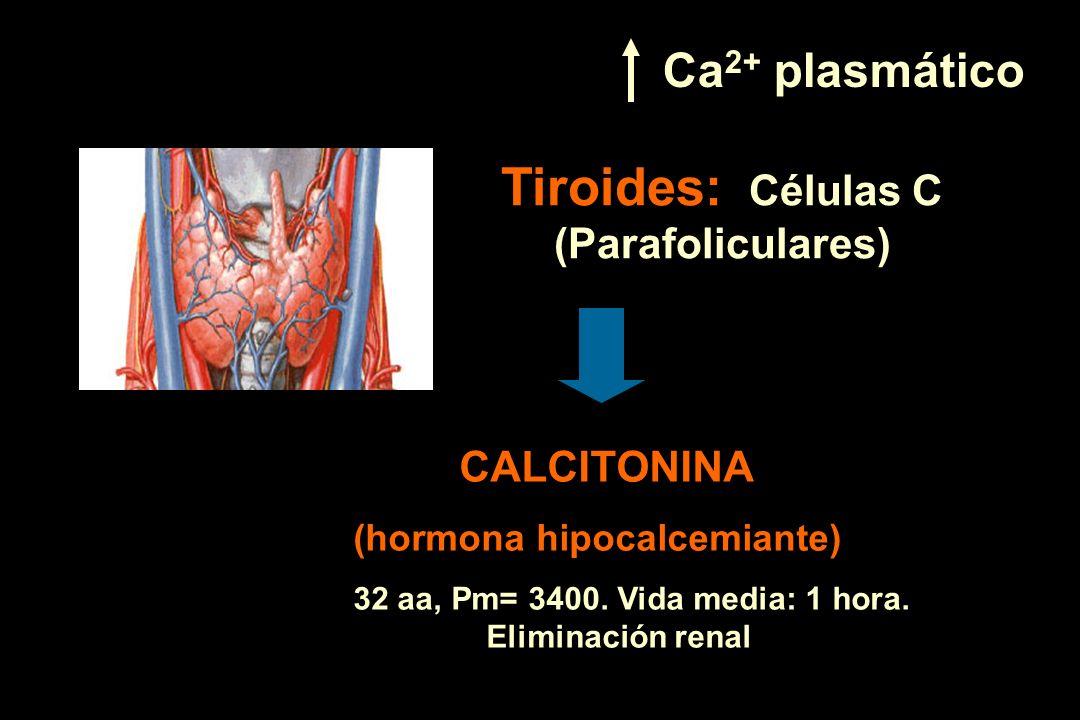 Tiroides: Células C (Parafoliculares) CALCITONINA (hormona hipocalcemiante) 32 aa, Pm= 3400. Vida media: 1 hora. Eliminación renal Ca 2+ plasmático