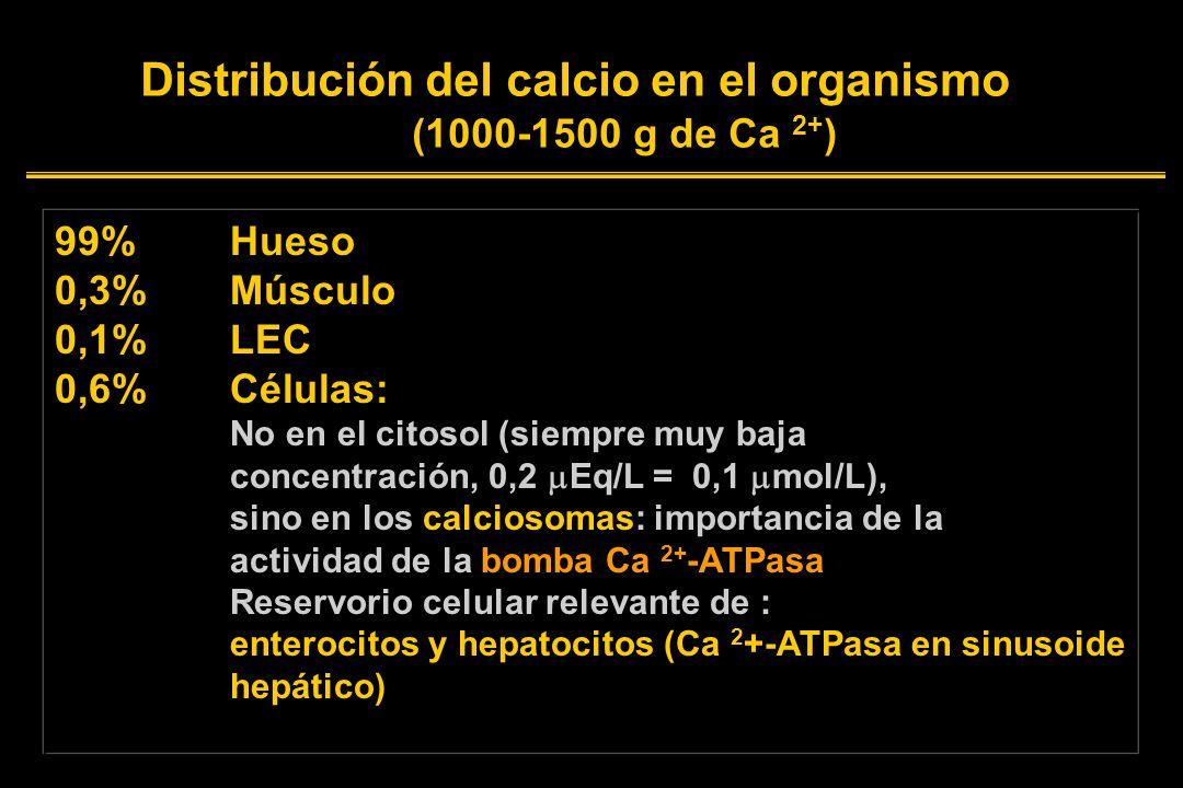 Distribución del calcio en el organismo (1000-1500 g de Ca 2+ ) 99%Hueso 0,3%Músculo 0,1%LEC 0,6% Células: No en el citosol (siempre muy baja concentración, 0,2 Eq/L = 0,1 mol/L), sino en los calciosomas: importancia de la actividad de la bomba Ca 2+ -ATPasa Reservorio celular relevante de : enterocitos y hepatocitos (Ca 2 +-ATPasa en sinusoide hepático)