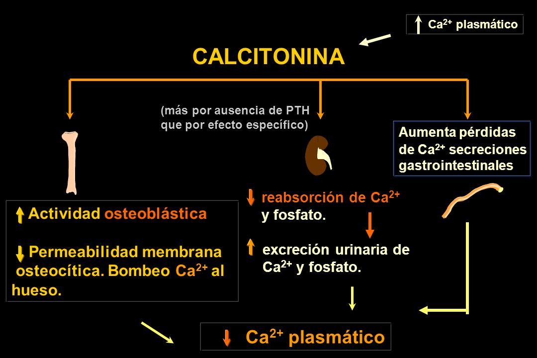 Ca 2+ plasmático CALCITONINA Ca 2+ plasmático Actividad osteoblástica Permeabilidad membrana osteocítica. Bombeo Ca 2+ al hueso. reabsorción de Ca 2+