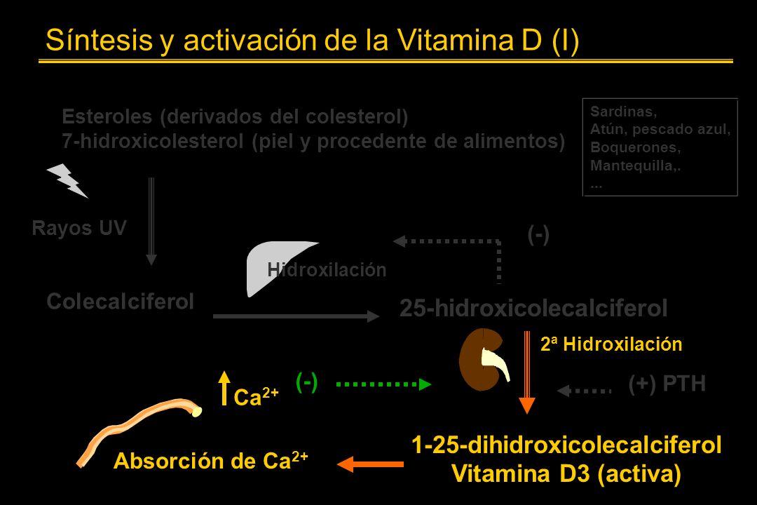 Síntesis y activación de la Vitamina D (I) Esteroles (derivados del colesterol) 7-hidroxicolesterol (piel y procedente de alimentos) Sardinas, Atún, p