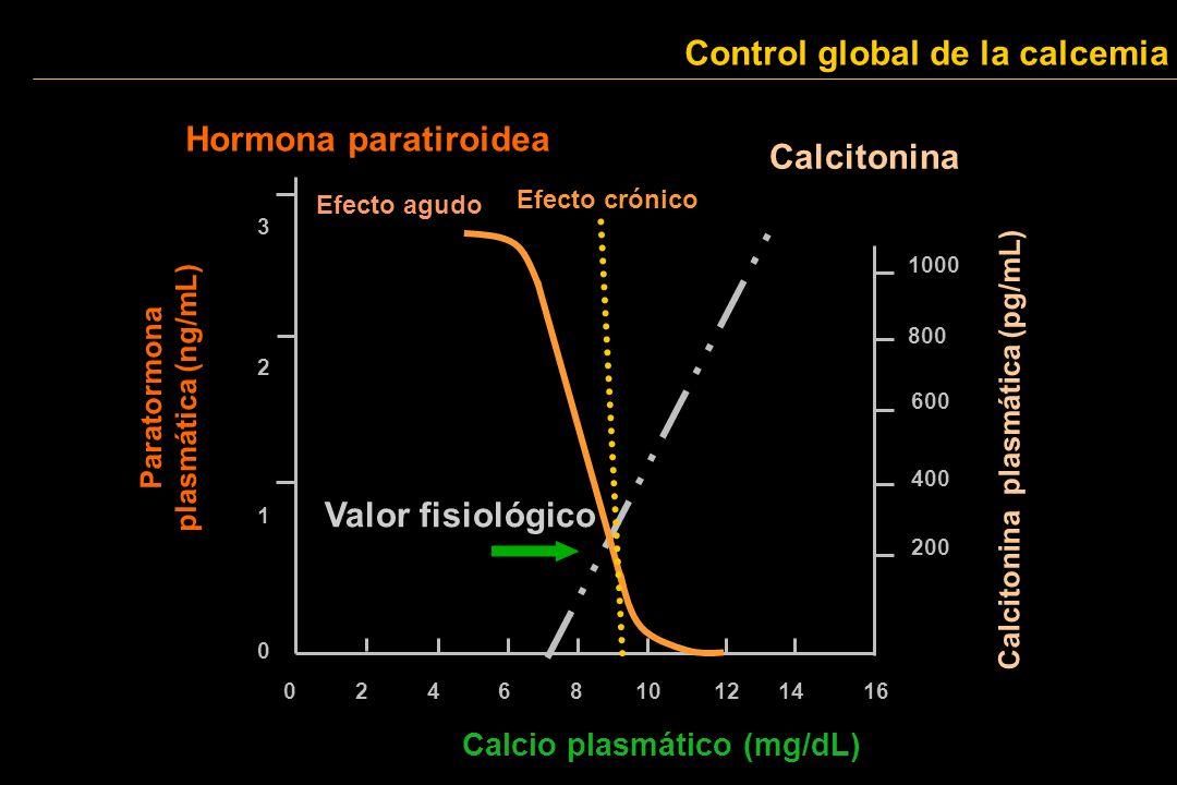 Paratormona plasmática (ng/mL) 3 1 2 0 0 2 4 6 8 10 12 14 16 Calcio plasmático (mg/dL) 200 400 600 800 1000 Calcitonina plasmática (pg/mL) Calcitonina