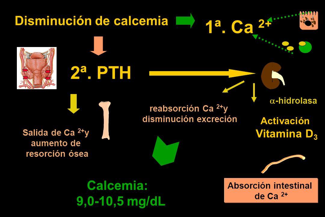 2ª. PTH Activación Vitamina D 3 Disminución de calcemia -hidrolasa Salida de Ca 2+ y aumento de resorción ósea reabsorción Ca 2+ y disminución excreci