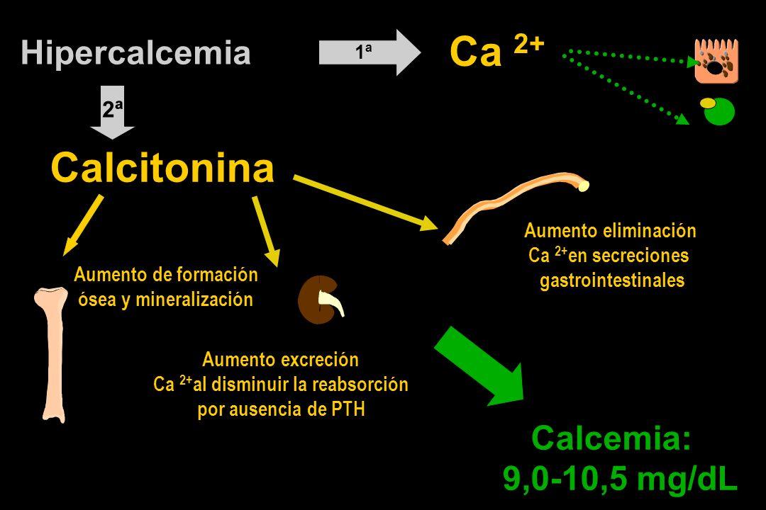 Hipercalcemia Aumento excreción Ca 2+ al disminuir la reabsorción por ausencia de PTH Ca 2+ 1ª Calcemia: 9,0-10,5 mg/dL 2ª Calcitonina Aumento de formación ósea y mineralización Aumento eliminación Ca 2+ en secreciones gastrointestinales