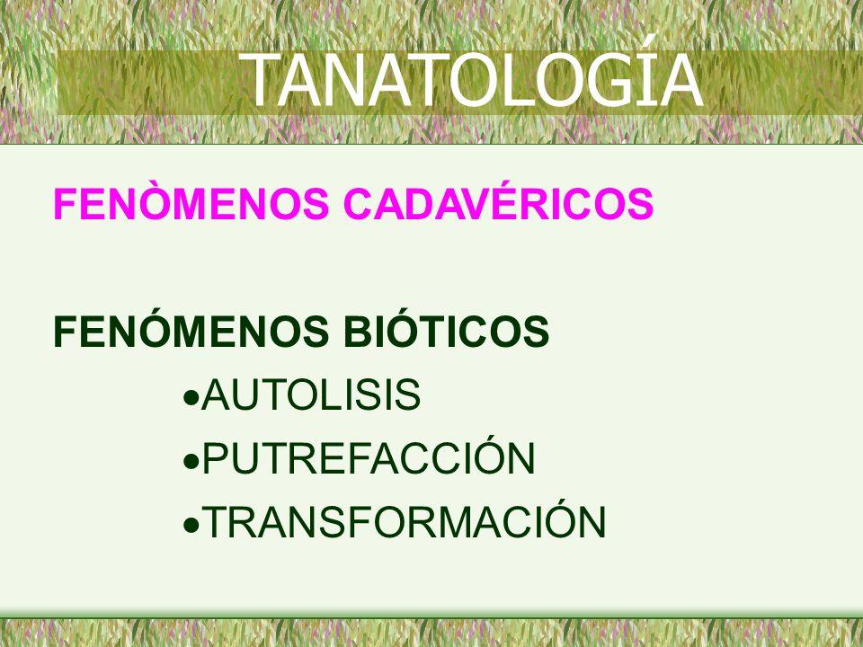 FENÒMENOS CADAVÉRICOS FENÓMENOS BIÓTICOS AUTOLISIS PUTREFACCIÓN TRANSFORMACIÓN TANATOLOGÍA